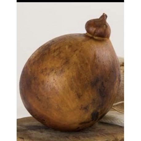 Fatia de Caciocavallo Fumada Artesanal cerca de 550 gr
